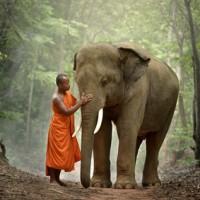 Monks and elephants.